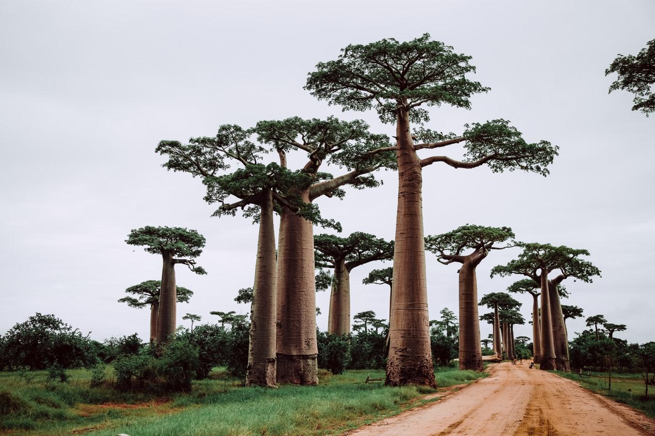 Road Trip à Madagascar